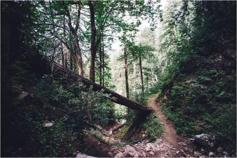 My Path by Nicole Ryan - best realtors in Saskatoon